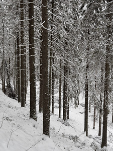 Hillside forest and Seitseminen winter